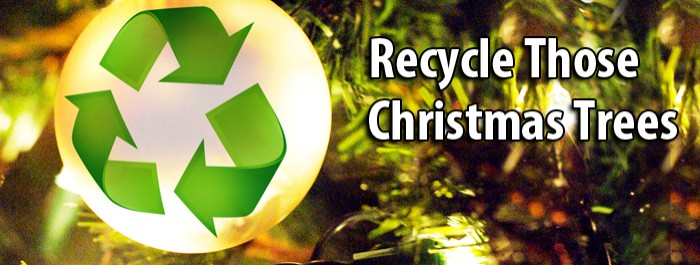 Recycle Those Christmas Trees